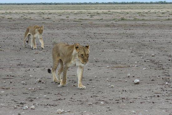 Namvic Tours & Safaris