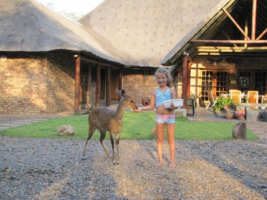 Animals visiting the lodge