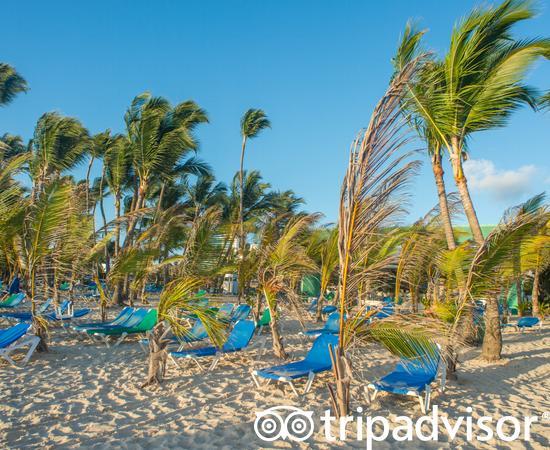Beach at the Hotel Riu Palace Punta Cana
