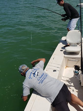 Sharks Chaser Charters