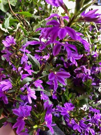 Chez Jules: Outdoor area flowers