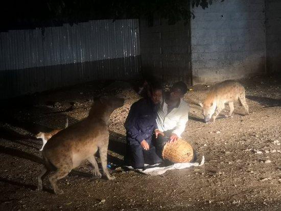 Feeding hyena at Harar Ethiopia 🇪🇹... www.abextour.com