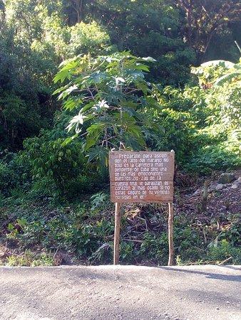 Bartolome Maso, Cuba: Alto del Naranjo, Sierra Maestra