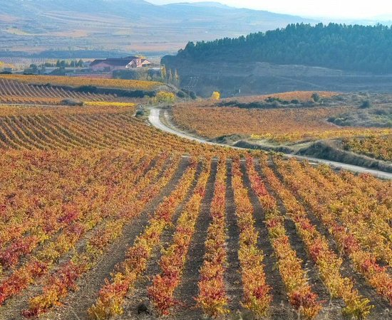 La Rioja, Španělsko: Paisaje otoñal de viñedos en Rioja. Info con bodegas para visitar en Rioja https://guias-viajar.com/espana/rioja-que-bodegas-visitar/