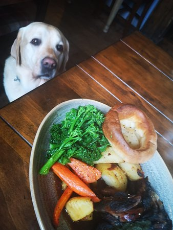 We love you Duff! (but no, you can't have any roast)