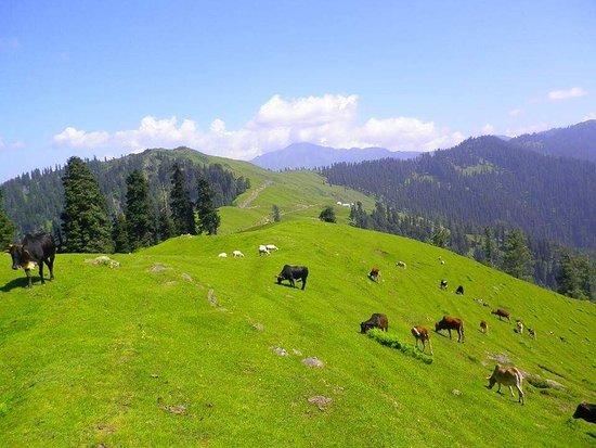 Bagh, Pakistan : Panjal Mastan National Park