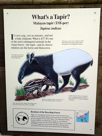 Information sign on tapirs at the zoo