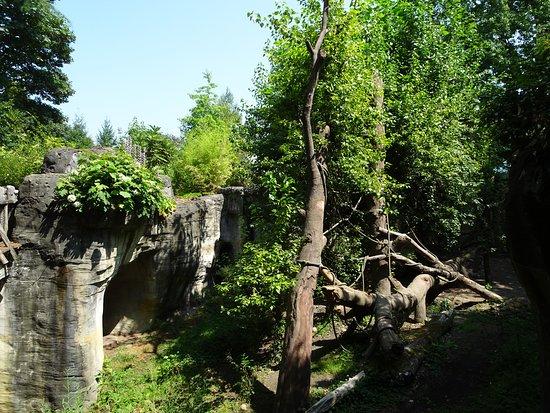 Natural setting, where the zoo orangutans live
