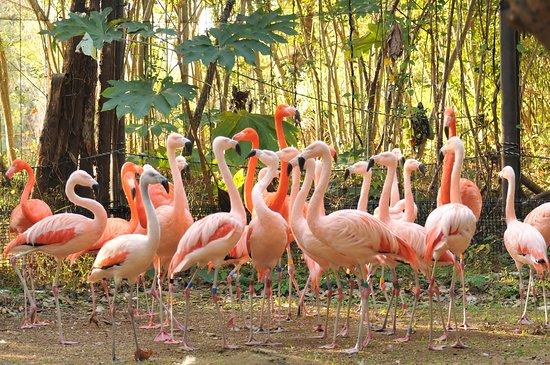 Noichi Zoological Park of Kochi Prefecture: 温帯・熱帯の森 フラミンゴ展示場