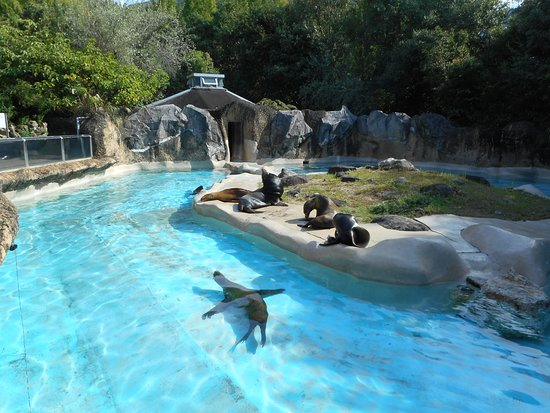 Noichi Zoological Park of Kochi Prefecture: 温帯の森 のんびりくつろぐカリフォルニアアシカたち。