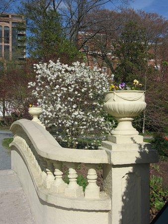 Halifax Public Gardens: Lower Bridge & Star Magnolia