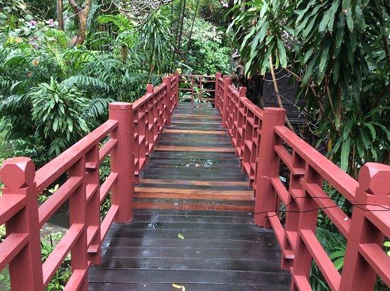 Jungle Tao 사진