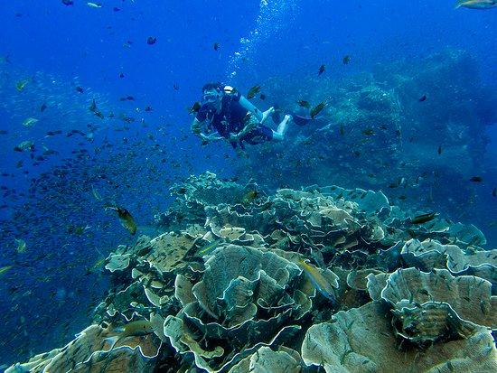 Кораллы у острова Ко-Чанг