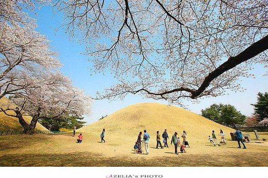 韓国の美しさは、桜の発見は9日8夜を発見する