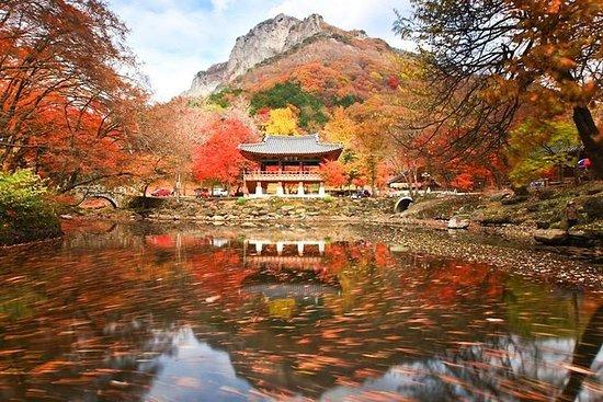Klassisk Naejangsan National Park...