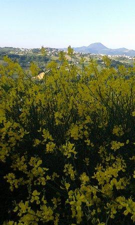 Maiolati Spontini, איטליה: Che spettacolo...😉
