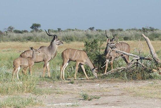Khutse Game Reserve weekend di fuga
