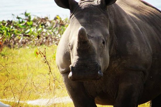 Game Drive at Lake Chivero with Rhino...