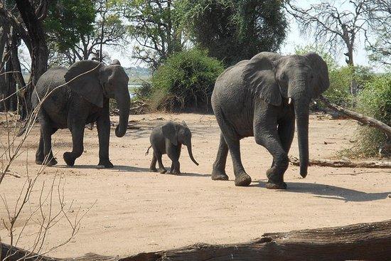 Chobe National Park...