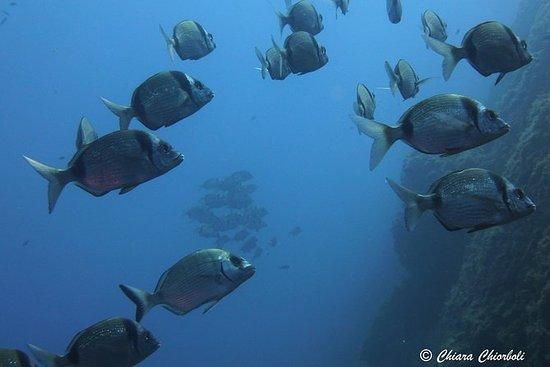 Schnorcheln im Meeresschutzgebiet von...