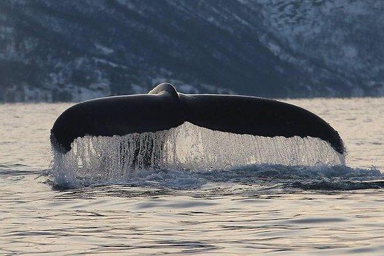 Tromso: Whale Watching aan boord van ...