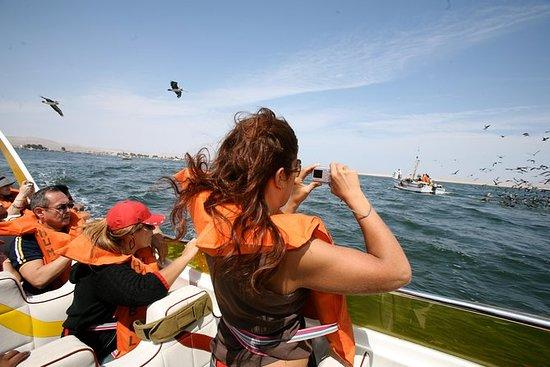 Fra Lima: Fulldags Ballestas Islands...