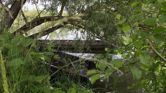 Le marais de Bourges: Des barques entre les arbres