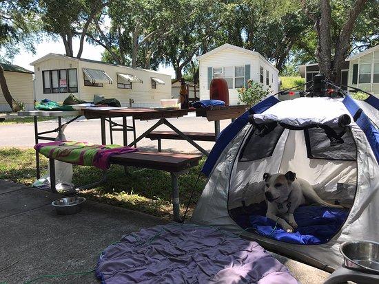 LAKELAND RV RESORT - Prices & Campground Reviews (FL