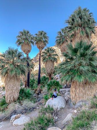 Joshua Tree National Park, Califórnia: Weit weg vom Strand - aber trotzdem unter Palmen. Der 49 Palms Oasis Trail war eines meiner Highlights im Joshua Tree Nationalpark.