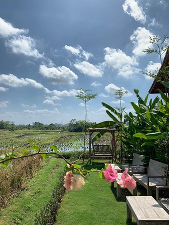 Very nice place at the rice fields