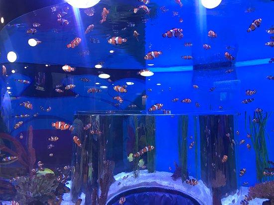 Skip the Line: Ripley's Aquarium of Canada Ticket in Toronto: Nemos!