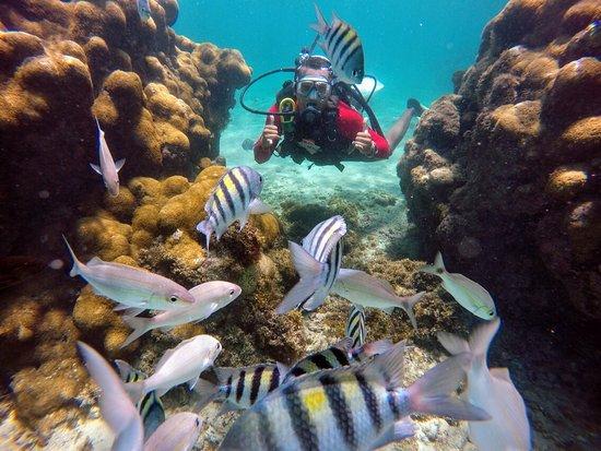 Mergulho nos Partachos de Maracajaú, lugar incrível, não pode deixar de conhecer, o Caribe Brasileiro.
