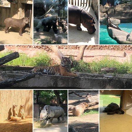 Barcelona Zoo: Animals