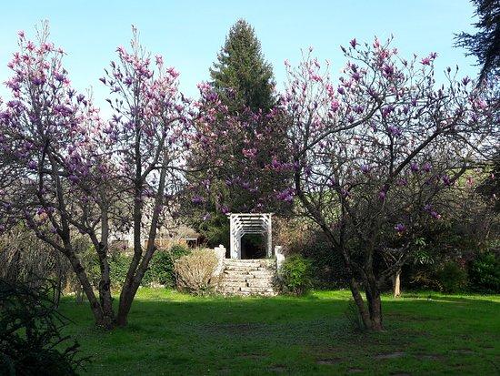 Saint-Pe-de-Bigorre, Pháp: Les magnolias en fleur