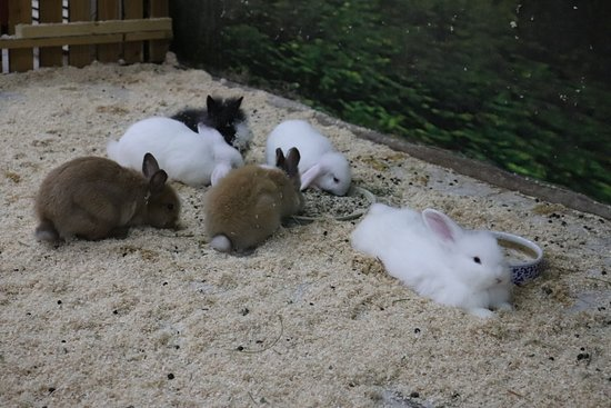 Jumpy little rabbits
