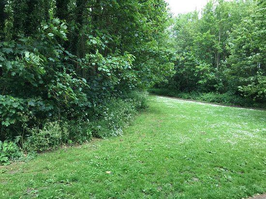 Leavesden Country Park: Woodland