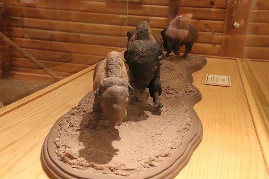 More buffaloes