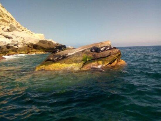 La colonia de Leones Marinos permanece casi todo el tiempo en La reserva de Cabo Pulmo !! Sea Lion Colony remains most of the time here in the Cabo Pulmo Marine Park !!