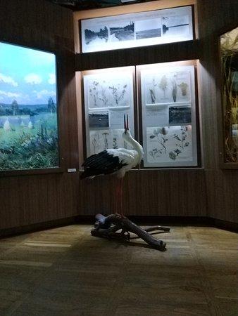 Baranovichi, เบลารุส: Зал #2 животный и растительный мир