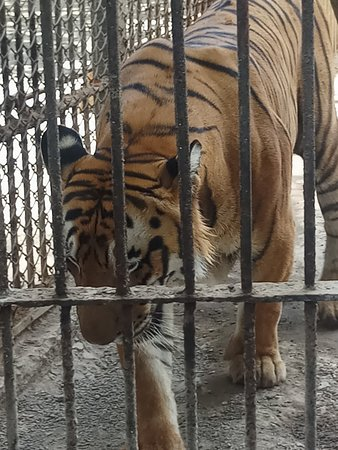 Sakkarbaug Zoological Gardens (Junagadh) - 2019 What to Know Before