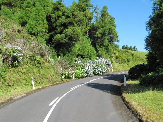 Ponta Delgada, Portugalsko: verde e ortensie