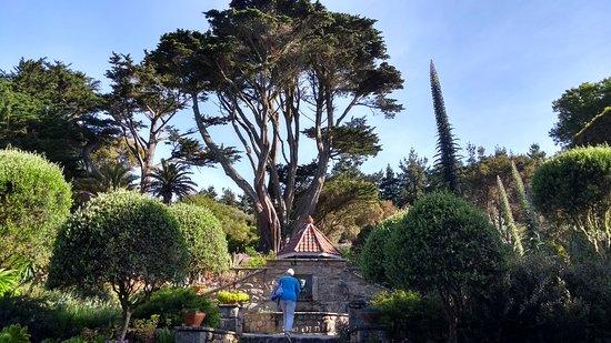 Tresco Abbey Garden & Valhalla Collection: Inside Gardens