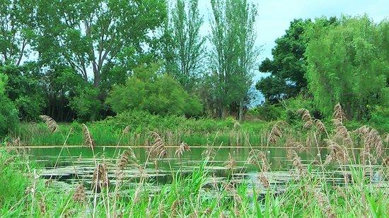Dar una vuelta junto a esta pequeña laguna es muy relajante al mismo tiempo que interesante