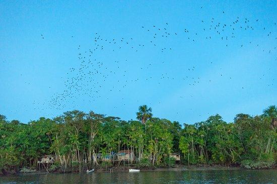 Amazon Star Turismo