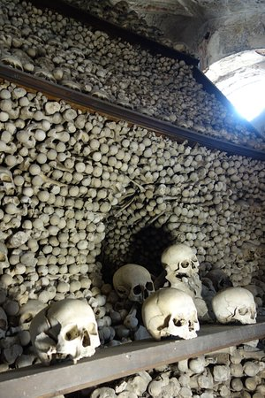 bones everywhere