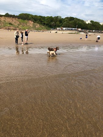 Lovely clean beach with dog free area