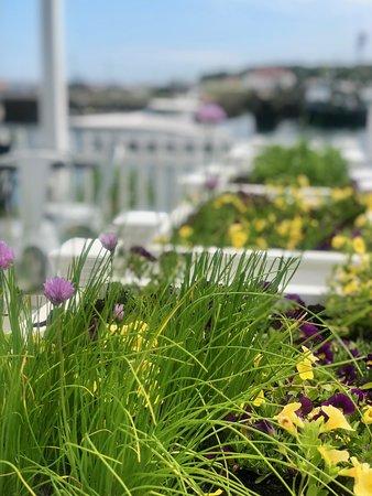 Fishermen's View: Patio herbs