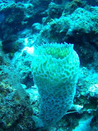 Erg mooi koraal.