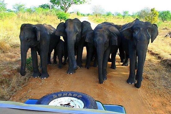 Udawalawe National Park Afternoon...