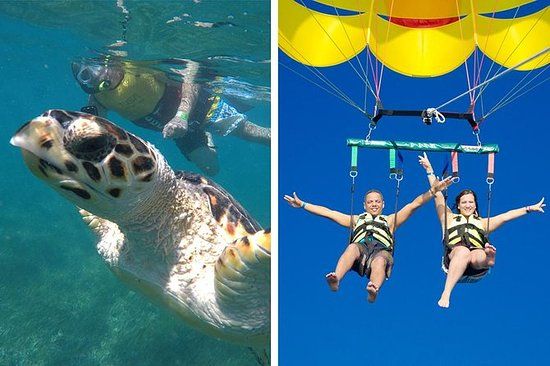 Sea Turtles, statuer, Reef, Shipwreck...
